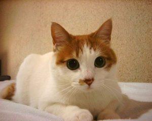 cat-1404368