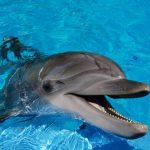 dolphin-2-1246799